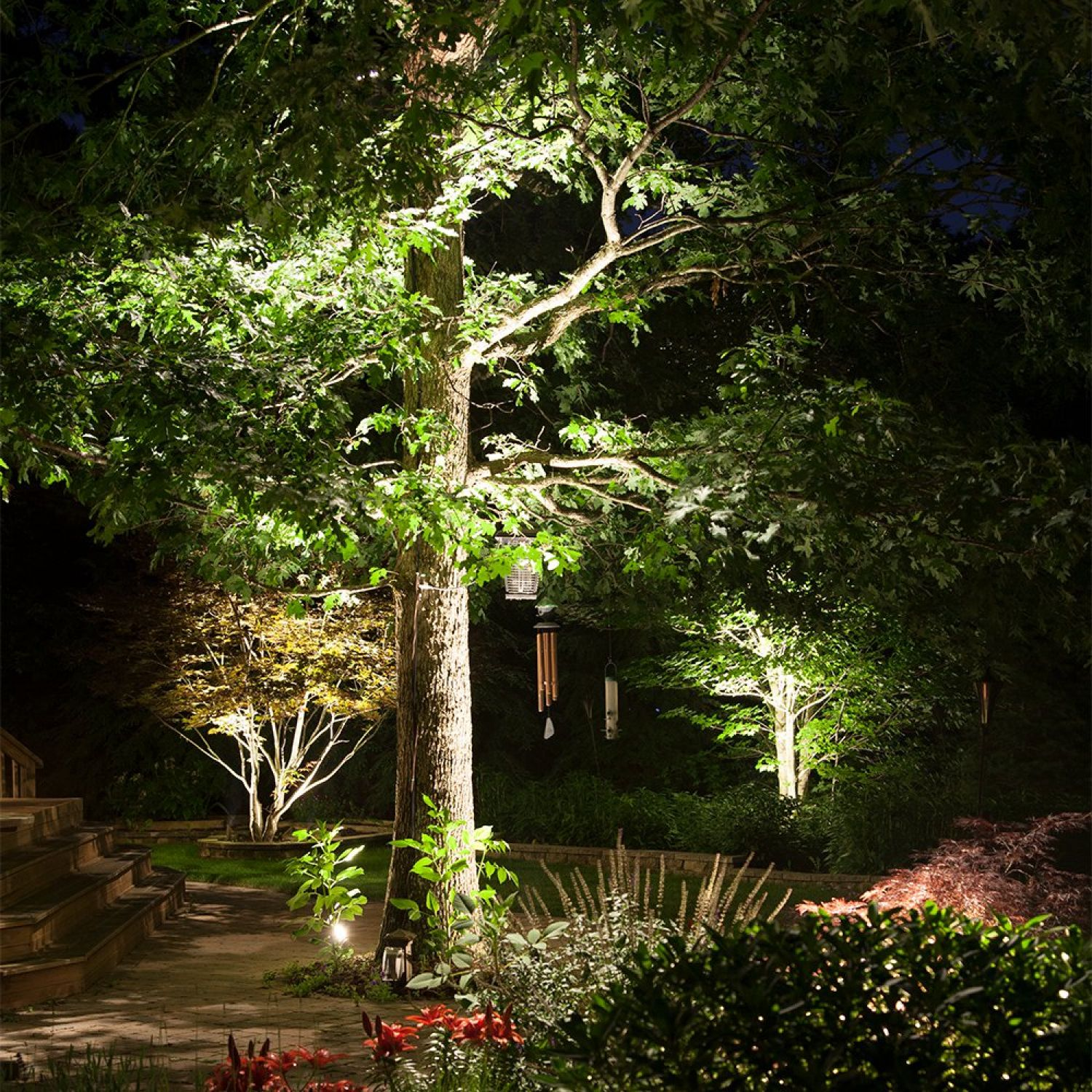 Tree Uplighting Gallery Outdoor