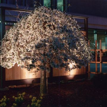 Uplighting for Trees and Shrubs